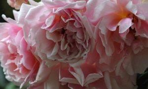Felicia Rose 2